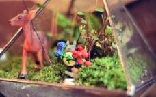 龙猫微景观图片