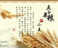 五谷杂粮 小麦