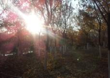 阳光穿过树林图片