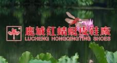 鹿城红蜻蜓图片