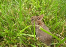草原小兔子图片