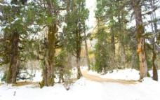 森林的雪景图片