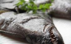 鲽鱼头图片