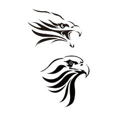 鳥類 老鷹