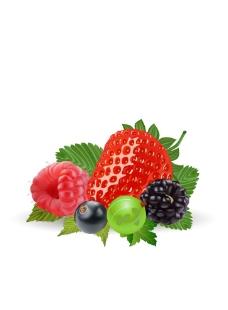 水果矢量圖圖片