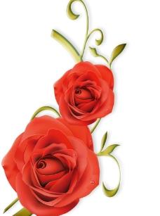 玫瑰素材图片