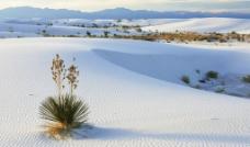 白色沙漠图片