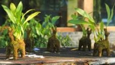 创意小植物图片
