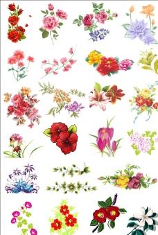 装饰花朵图片