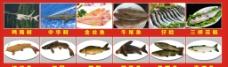 各种鱼类图片