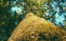 山上的蕨类图片