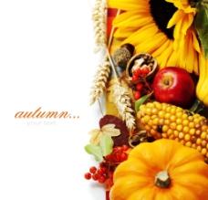 秋季作物收获图片
