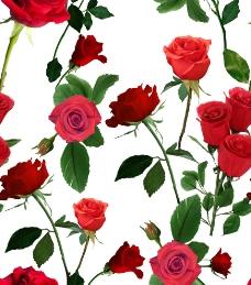 艳丽玫瑰花图片