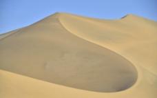 沙漠鸿图片