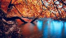 河边红叶图片