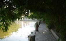 湖边竹林图片