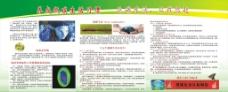 低碳生活 宣传栏图片