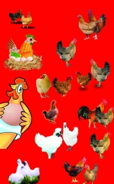 雞大全圖片
