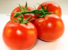 唯美番茄图片