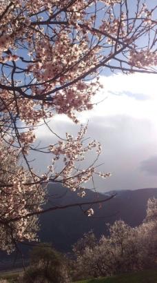 桃花朵朵图片