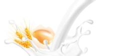 牛奶鸡蛋小麦PSD分层图片