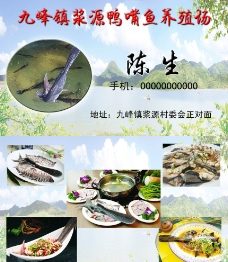 鸭嘴鱼养殖场名片图片