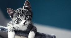 好奇的猫咪