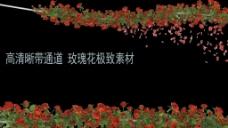 玫瑰花  唯美-浪漫-温馨(带通道)