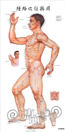 人体结构图侧面图片