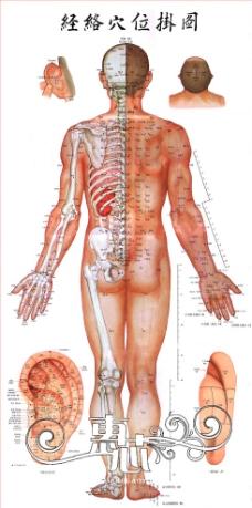 人体结构图图片