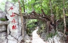 石上森林入口图片