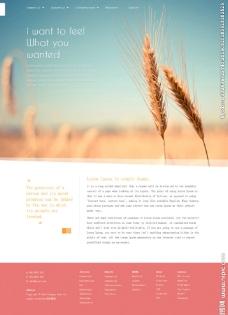 有机小麦农业网站模板图片