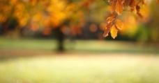 秋天景色图片