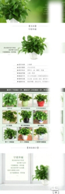 植物详情页模板图片