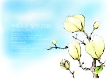 玉兰花背景